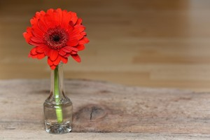 beautiful flowers will improve the good energy in your home